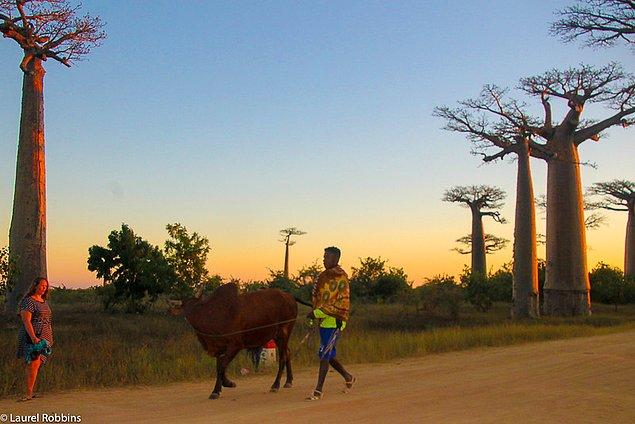 2. Madagaskar'a genellikle Sekizinci Kıta denir.