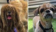 Кардинальное преображение бездомной собаки, с которой сбрили около 3 килограммов шерсти