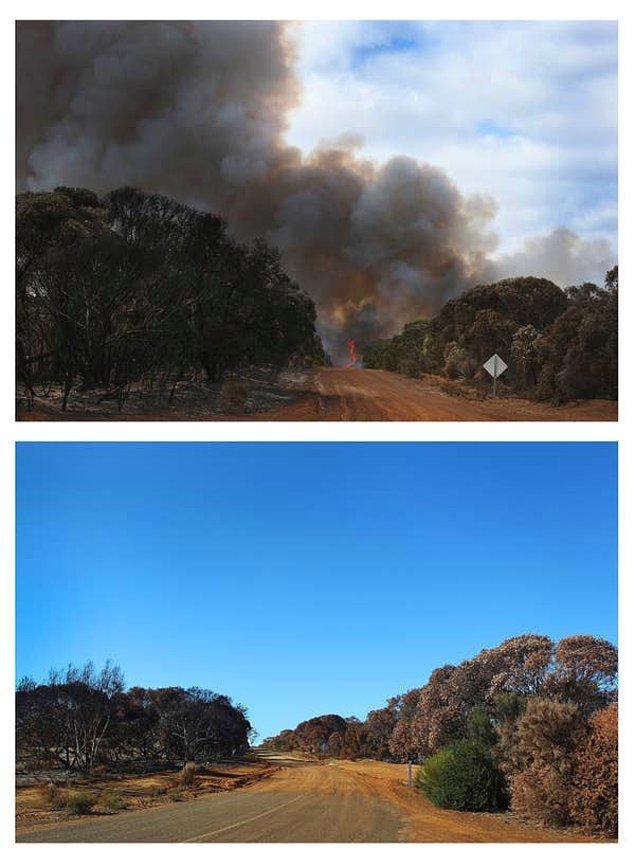 25. 2011'de Kanguru Adası'nda çıkan yangın sırasında ve altı hafta sonra aynı yerde çekilen bir fotoğraf: