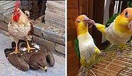 15 птиц, способных напугать до чертиков кого-угодно