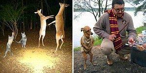 20 самых странных фотографий с животными, которые «невозможно объяснить»