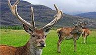 Два австралийца, которые загорали обнаженными и потерялись в лесу, убегая от оленя, были оштрафованы за нарушение ограничений в связи с коронавирусом
