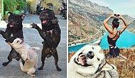 15 самых милых фото с собачками, которые заставят вас улыбнуться и сделают ваш день лучше