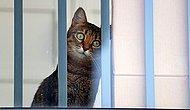 Власти запретили кошкам выходить улицу в одном из районов Австралии