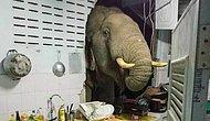 В Таиланде слон-хулиган, который снес стену кухню ради мешка риса, пришел в другой дом полакомиться кошачьим кормом