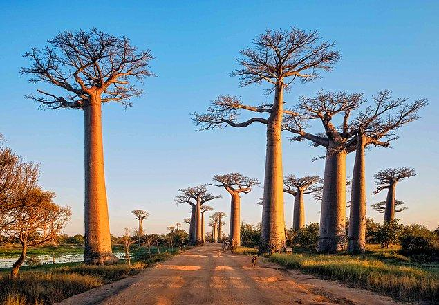 12. Madagaskar