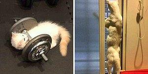 Кошки вне контекста: 20 фотографий пушистиков, которые не поддаются объяснению