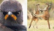 Победители премии Comedy Wildlife Photography Awards 2021 еще раз доказали, что дикая природа способна рассмешить не хуже комедии  (11 фото)