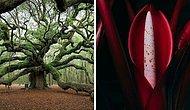 15 самых удивительных ботанических чудес, от которых сложно оторвать взгляд