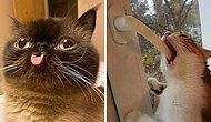 20 фотографий кошек, которые, кажется, сломались