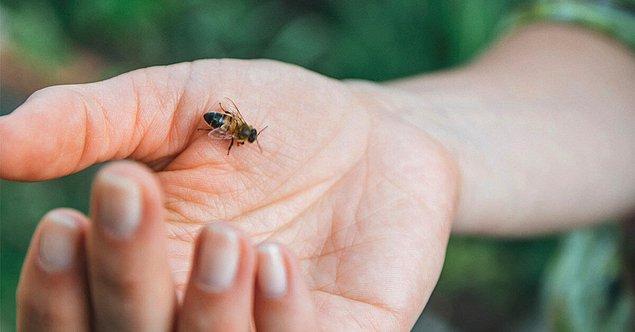 8. Yazın sivrisinekler dışında arı ve böcek sokmaları da oldukça sık karşılaşılan durumlar.