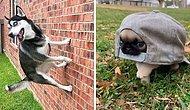 «Что не так с вашей собакой?»: Люди делятся фотографиями своих «неисправных» четвероногих любимцев (15 новых фото)
