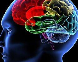 Brain Supplements And Activities That Improve Concentration