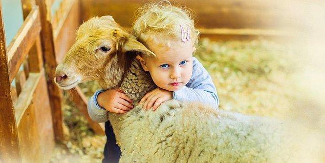 Her yıl olduğu gibi bu yıl da veganlar ve vejetaryenler #KurbanCinayettir diyerek Kurban Bayramı'na tepki gösterdi.