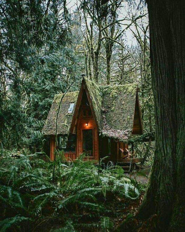37. Büyülü ormandaki bu küçük cadı kulübesi.