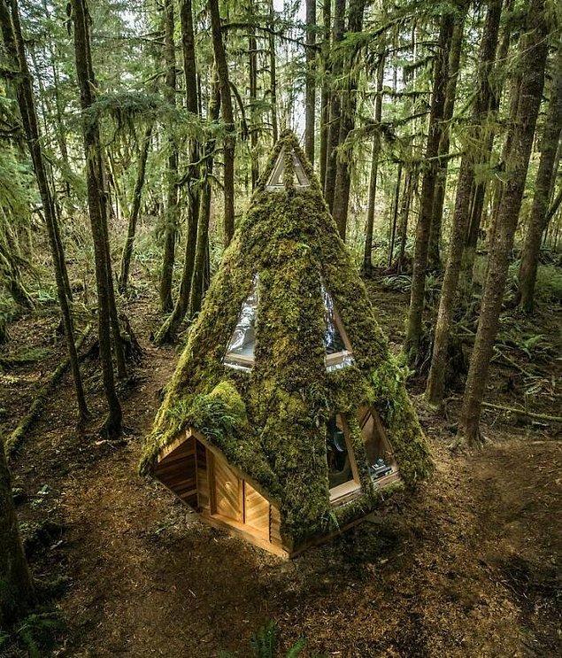 45. Tasarımı Jacob Witzling ve Sara Underwood'a ait olan ve Kuzeybatı Pasifik Yağmur Ormanı'nda bulunan elmas kabin