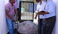 В Шри-Ланке мужчина обнаружил у себя на заднем дворе кластер звездчатых сапфиров стоимостью до 100 миллионов долларов