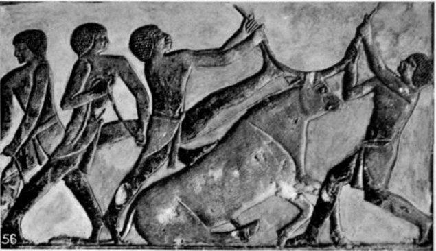 Mısırlılar her koç ve boğayı da kurban olarak tanrıya sunmuyorlardı. Özellikle siyah renkli koç ya da boğayı asla kurban etmezlerdi. Beyaz renkte, sağlıklı ve kilolu hayvanları özenle seçerler, en ufak bir leke olması durumunda başka hayvana bakarlardı.
