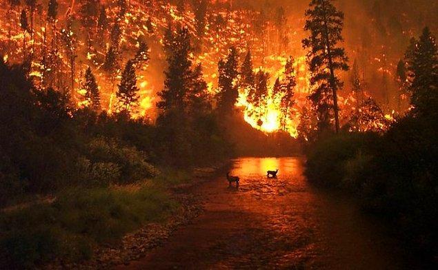 2003 Sibirya Tayga Yangını, Rusya