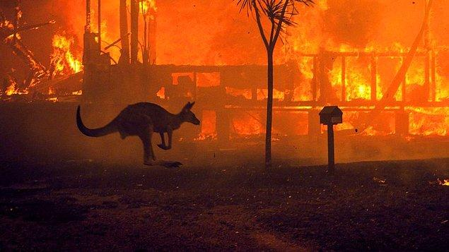 2019-2020 Avustralya Orman Yangınları