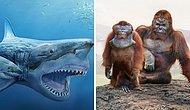 10+ удивительных сравнений размеров доисторических животных с их современными потомками