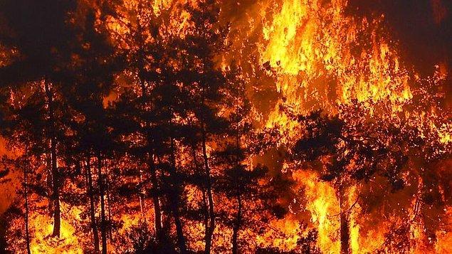 Üç gündür Türkiye'nin güneyi alev alev yanıyor; önce Manavgat ardından da 21 farklı şehirde çıkan orman yangınları ciğerimize ateş düşürdü.