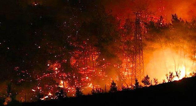 Türkiye'nin dört bir yanından yangın haberleri geliyor, söndürülen yangınların ve soğutulma çalışması yapılan bölgelerin ardından ise yeniden ağaçlandırma çalışmalarıyla ilgili tartışmalar sürüyor.