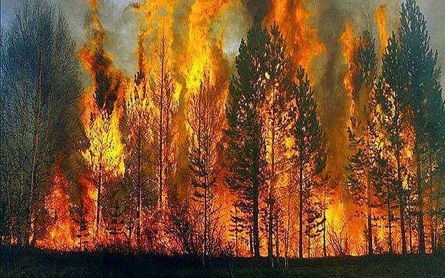 Ülke tarihimizin en büyük orman yangınlarından birini yaşasak da ne yazık ki yeterli uçak ve helikopterlerin olmaması nedeniyle yangınlar büyük oranda kontrol altına alınamadı.