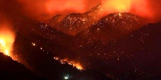 Şu görüntüye iyice bakın: yanan sadece ormanlar değil, geleceğimiz aynı zamanda!