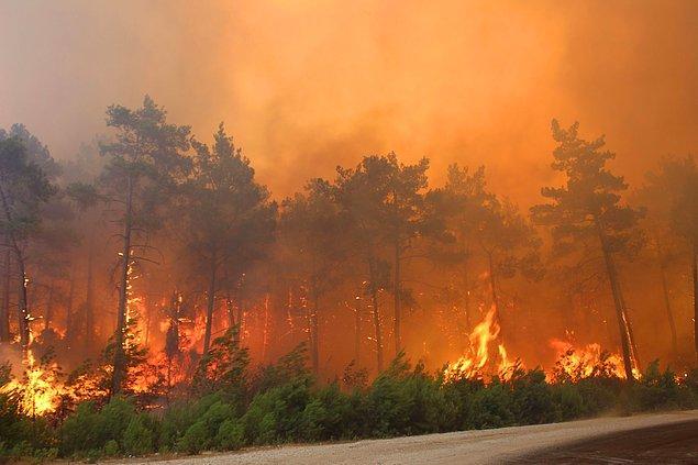 Hepinizin bildiği ve derinden hissettiği gibi günlerdir söndürülemeyen ve yeterli envantere sahip olmadığımız için gittikçe büyüyen orman yangınları içimizi eritiyor. Yiten canlar, yaşam alanlarını kaybeden insanları düşündükçe kahroluyoruz.