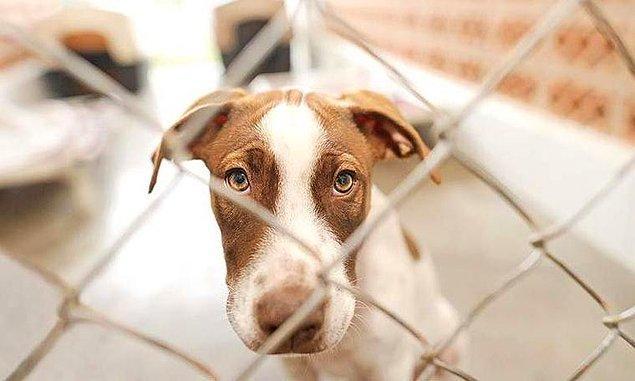 17. Hayvanların can olarak sayılmaması ve çıkartılmamakta ısrar edilen 'etkili' bir hayvan yasası,