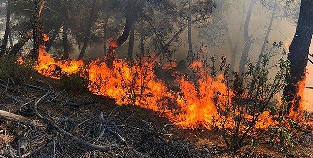 Ne kadar mücadele edersek edelim her geçen gün yayılan orman yangınlarıyla karşı karşıyayız. Binlerce gönüllü vatandaş ve görevli bu mücadelenin bir ucundan tutuyor, bu kabusun artık son bulması için çabalıyor.