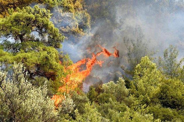 14:00 Dalaman'da da orman yangını çıktı.