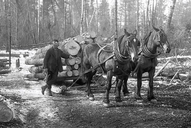 Ancak Peshtigo'yu zengin eden ormanlar, aynı zamanda kasabanın sonunu getirdi.