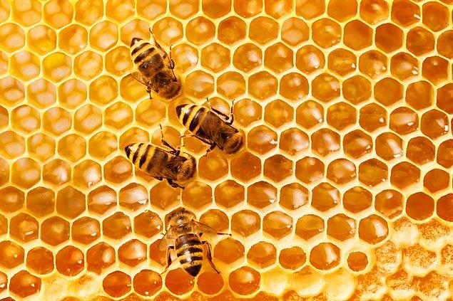 1. Arının yediği bala, örümceğin yediği ise zehre dönüşür.