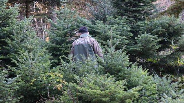 """""""OGM'nin Ulusal Orman Envanteri'ni hazırlaması gerekir"""""""