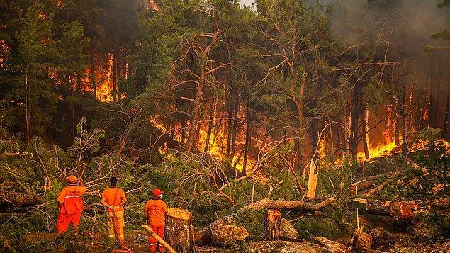 15. Ülkemizde de günlerce dur durak bilmeyen orman felaketleri ciğerimizi yaktı...