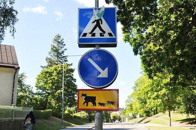 """4. """"Uppsala'da 'Dikkat edin. Yavrularıyla karşıya geçen bir kedi var.' anlamına gelen bir trafik levhamız var."""""""
