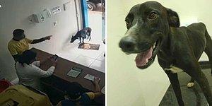 """""""Он выставил травмированную лапку вперед"""": Трогательная история о том, как бродячий песик пришел в ветеринарную клинику за помощью"""