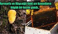 Basra Böceklerinin Orman Yangınlarında Zarar Görmesiyle %90'nı Ülkemizde Yapılan Çam Balı Üretimi Durabilir!