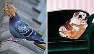 20 самых позитивных фотографий с животными, которые живут на полную катушку