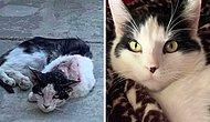 Большая разница: Люди делятся фотографиями своих кошек до и после того, как их приютили (Новые 15 фото)