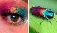 Мейкап художница демонстрирует красоту насекомых с помощью своих образов для макияжа