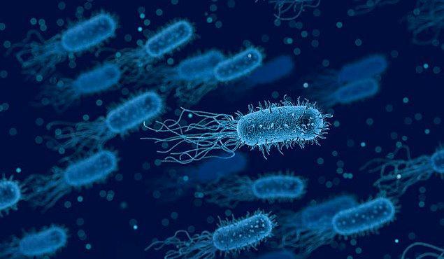 Genom dizilmesi, suda hidrokarbon parçalama potansiyeli gösteren birkaç bakteri türünü ortaya çıkardı.