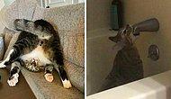 Кошки вне контекста: 15 новых фотографий пушистиков, которые не поддаются объяснению