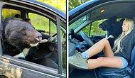 Гималайский медведь разъезжает по Новосибирску на пассажирском сиденье