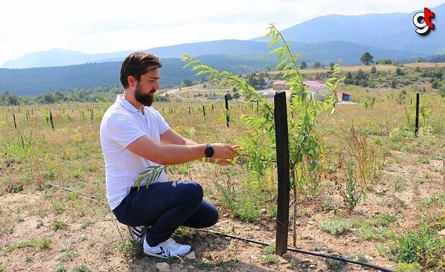 Genç çiftçi akabinde ülkemizde ve dünyada pek çok alanda kullanılan safran üretimine başlamış.