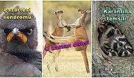 2021 Komik Yaban Hayatı Fotoğraf Yarışmasının Finalistlerinden Gününüzü Güzelleştirecek 30 Eğlenceli Hayvan