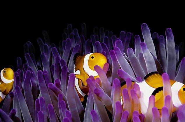 9. Birçok deniz canlısına yuva ulan Büyük set resifi; su üstü ve su altı görüntüleriyle görenleri büyülüyor.