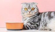 Ветеринары заметили, что кошки стали чаще болеть из-за стресса, поскольку хозяева проводят больше времени дома и нарушают их режим